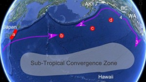 Sub Tropical Convergence Zone