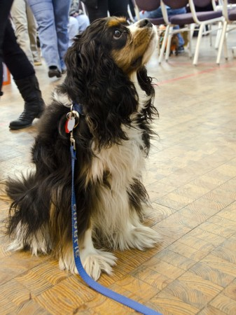 Charlie is a Cavalier King Charles Spaniel. He and his owner Carol Lemon are new to Juneau and came to the festival to meet the community.